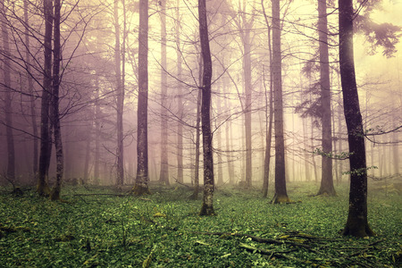 Beautiful mysterious color forest trees. Stockfoto