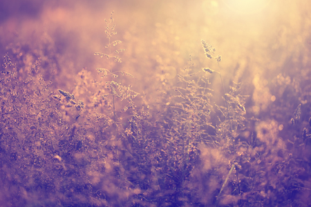 Vintage blurry photo of summer meadow at sunset with flare. Vintage filter effect used.