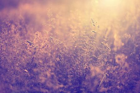 Vintage wazige foto van zomer weide bij zonsondergang met flare. Uitstekend filter effect gebruikt. Stockfoto - 46036438