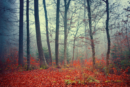 Kleurrijke dromerige; mistig bos herfst scène achtergrond. Stockfoto