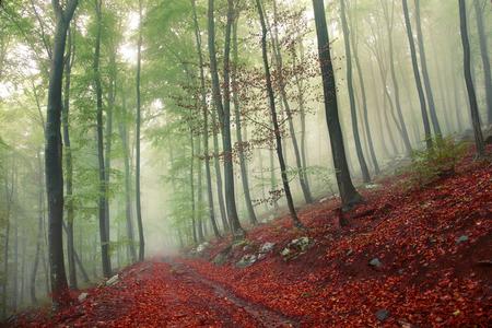 Hermoso cuento de hadas con el camino de bosque m�stico.