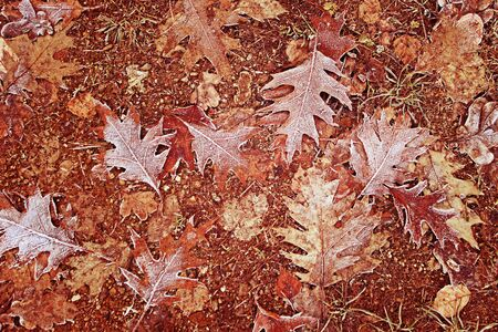 Frozen leaves on the forest ground. Foto de archivo