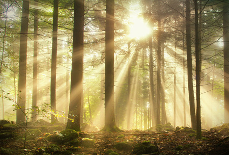 Magic forest with magic sun ray light. Stock Photo