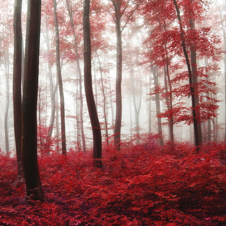 Oversaturated red autumn foggy forest. Glow light and color filter used.