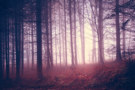 Creepy red saturated vintage forest trees. Color filter and vintage filter effect used.