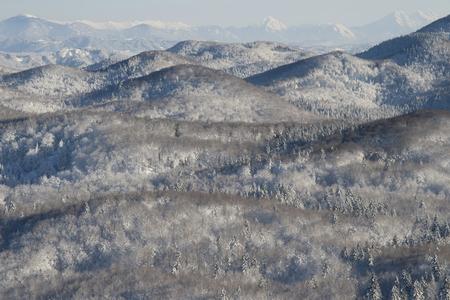Paisaje del bosque nevado en la luz de la ma�ana sol.