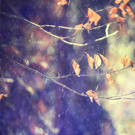 Lovely rainy autumn tree beech branch with leaves and with sunny light. Beautiful rainy autumn season nature background with copy space background. Imagens