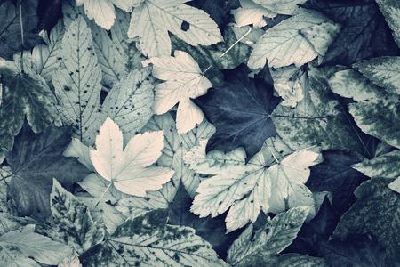 아름다운 단풍의 가을은 푸른 녹색 색조 가을 콜라주를 떠난다. 사랑스러운 흐릿한 가을 가을 복사 공간 배경으로 콜라주를 떠난다. 블루 그린 색조 효