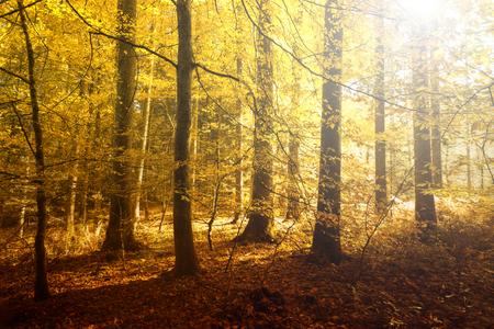 Fantasie gouden zon licht in de herfst boslandschap. Mooie rode, oranje en gele kleur bladeren op de bosbodem.
