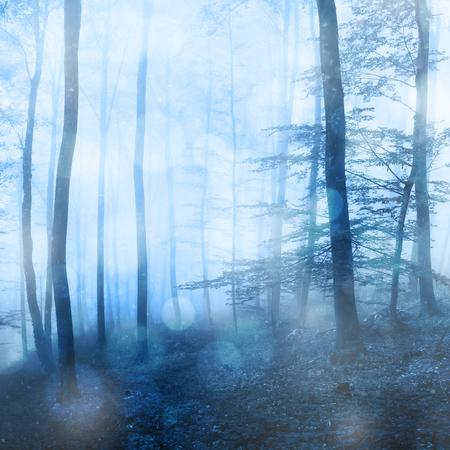 판타지 겨울 bokeh 배경으로 포리스트의 안개가 자욱한 강설량. 안개가 자욱한 겨울철 포레스트에서 아름다운 푸른 색.