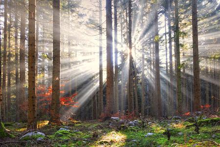 숲 풍경에 마법의 태양 광선. 꿈꾸는 숲에서 사랑스러운 단풍. 스톡 콘텐츠