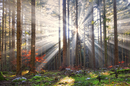 Magical sun rays in forest landscape. Lovely autumn colors in dreamy forest. Stockfoto
