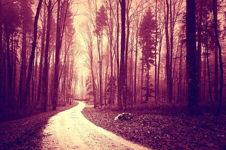 woodland  horror: Mystical red color saturated foggy light in forest with road. Red magenta color tone used. Stock Photo