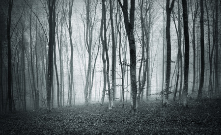 woodland  horror: Monochrome black and white grunge textured color foggy mystic forest trees landscape.