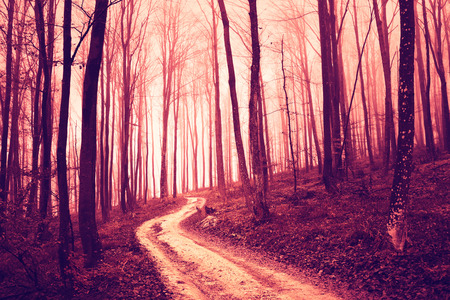saturated: Creepy violet red saturated forest with road. Color filter and vintage filter effect used.