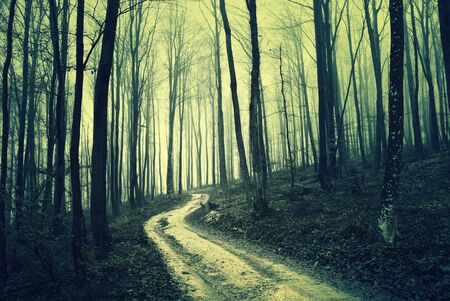 woodland  horror: Scary foggy dark brown colored forest. Forest landscape with road.