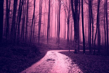 woodland  horror: Scary foggy dark pruple colored forest. Forest landscape with road.