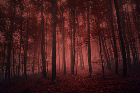 spooky forest: Foggy red colored spooky forest tree landscape. Red color filter effect used. Stock Photo