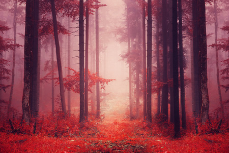 saturated: Red color saturated foggy fantasy forest scene with path. Filter color effect used. Stock Photo