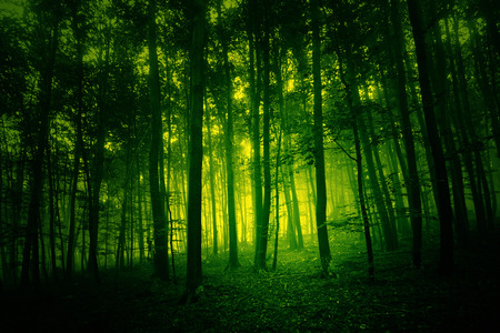 Dark yellow green colored foggy forest landscape.