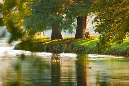 riverside trees: Two autumn riverside trees.