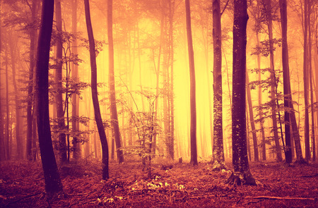 creepy: Mystic creepy red yellow colored forest scene.