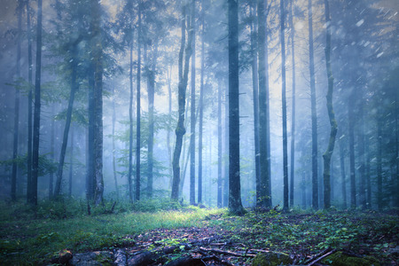 seasonal: Beautiful foggy and rainy seasonal forest landscape. Stock Photo