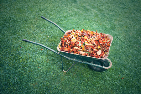 A metal green wheelbarrow full of autumn leaves on lawn.