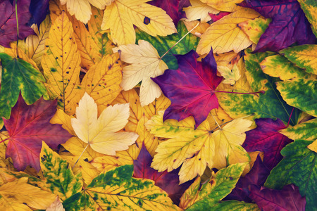 Artistic colorful autumn leaves background. Magical autumn leaves collage background. Stock Photo