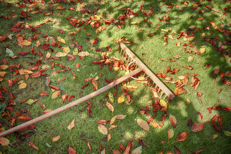 Autumn leaves with wooden rake tool on sunny grass.