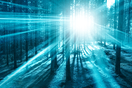 Magic bright cyan blue light in the forest with sun rays.