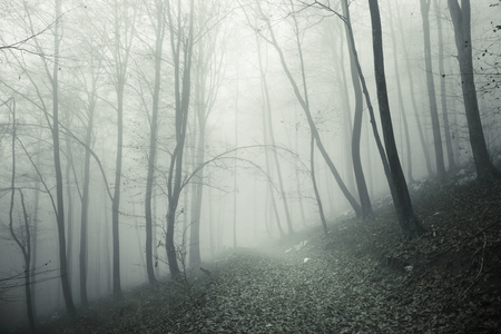 Foggy and scary forest trees with mysterious forest path. Stock Photo
