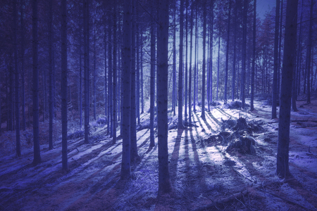 Mystic purple colored light with tree shadows in the forest. Stock Photo