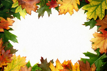 Beautiful autumn season oak artistic leaf frame with blank place for message.