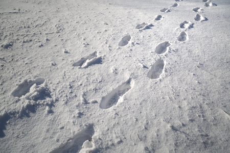 Shoe prints in fresh deep snow on snowy meadow at sunny day.