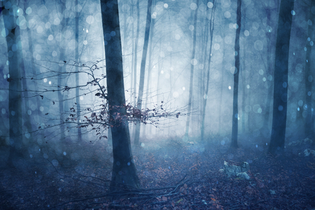 Magical blue colored foggy forest fairytale with bokeh. Fantasy colored autumn woodland. Color filter effect used. Stock Photo