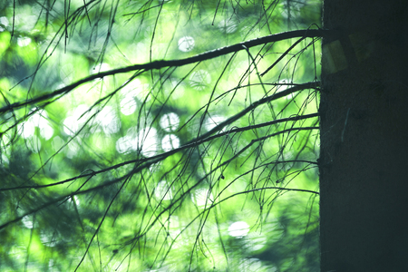 Beautiful blurry sunny forest tree branches with green bokeh background. Selective focus used.