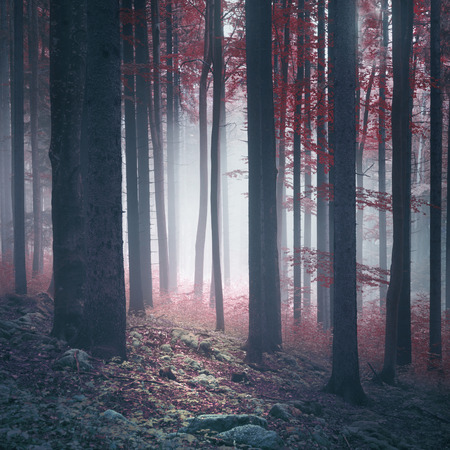 Autumn season red foggy forest with stones on the floor covered with moss. Stock Photo