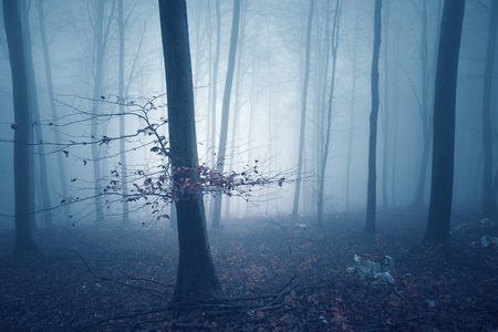 Dreamy blue colored foggy forest tree background. Fantasy colored autumn woodland. Color filter effect used. Stock Photo
