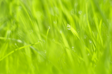 Morning nature spring blurry meadow background with beautiful drop. Selective focus used.