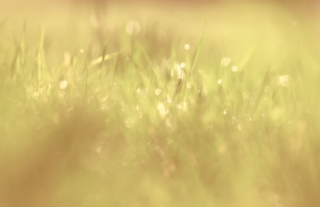 Bright blurry green and yellow grass background. Selective focus used. Vintage filter used.