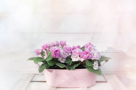 Flowers in flowerpot on bright pink wall background.