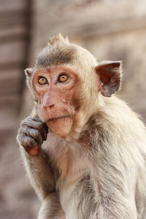 appears: Monkey appears to be thinking