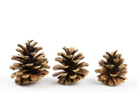 pine three: three pine cones isolated on white background Stock Photo