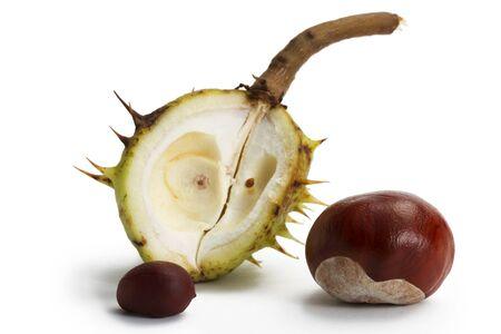 buckeye seed: two buckeyes in front of an opened buckeye pod on white background Stock Photo