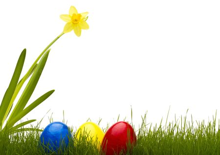 three easter eggs in grass with a daffodil with white background Stock Photo - 8870273