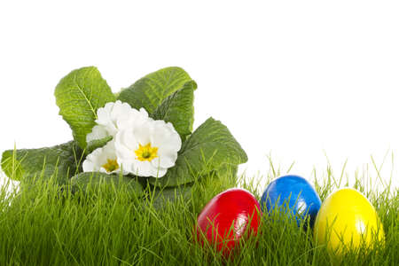 easter eggs with a white primula on white background photo
