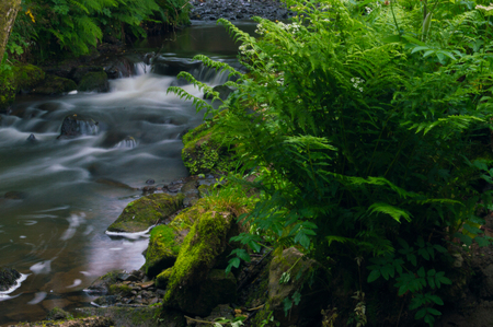 Flowing water turned milky white by a long exposure as it flows around green and brown moss covered rocks. 版權商用圖片