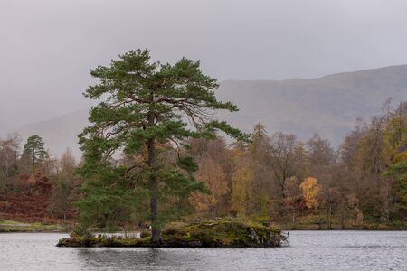 Beautiful and moody morning fall light at Tarn Hows in the English Lake District with views of Yewdale Crag, and Holme Fell during autumn. 스톡 콘텐츠 - 133067319