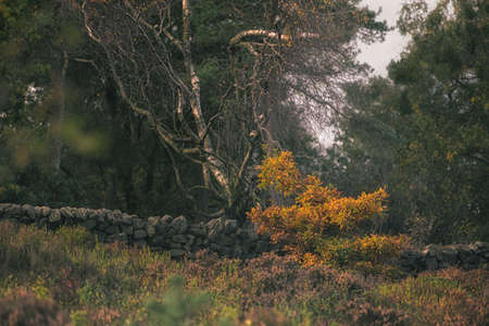 Swineholes wood. Vibrant autumnal moody, ethereal UK forest woodland trees, and foliage with a shallow depth of field.